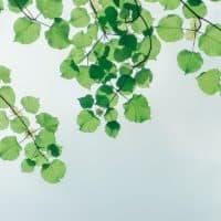 Silver Tree Wellness Phoenix Arizona